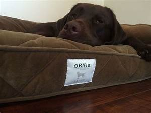 orvis deep dish memory foam dog bed daily dogs With deep dish dog bed with memory foam