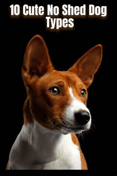Shed Dog Types Breeds Dogs Shedding Minimal