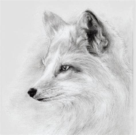 fox drawings  ai