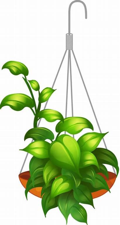 Hanging Clipart Flower Garden Plant Plants Baskets