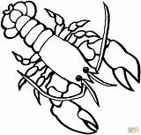 Lobster Coloring Printable Outline Drawing Tablets Ipad Compatible Android Version sketch template