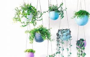 Plantes à Suspendre : carnet d id es plante suspendu plantes retombantes ~ Premium-room.com Idées de Décoration