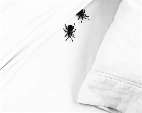 how to throw away mattress will i get rid of bed bugs if i throw my mattress away