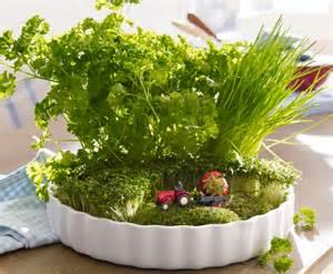Kräutergarten Für Die Küche