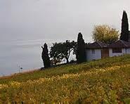 terrasses de lavaux schweiz mobil wanderland
