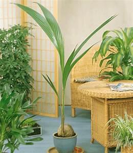 zimmerpflanze online kaufen zimmerpflanze gummibaum st With garten planen mit zimmerpflanzen versand online bestellen