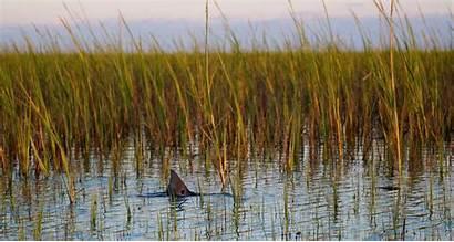 Fishing Offshore Gainesville Background Saltwater Club Scene
