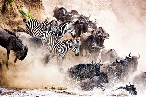 wildlife photography africa travel aerial photographer