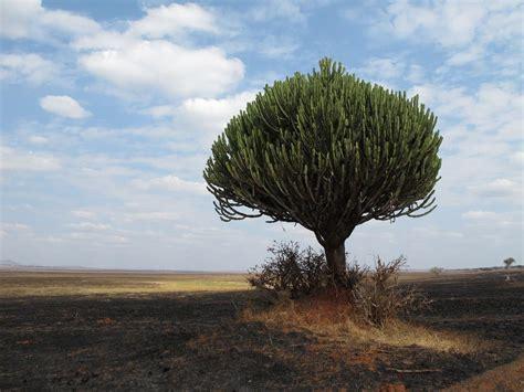 strange  beautiful trees    world