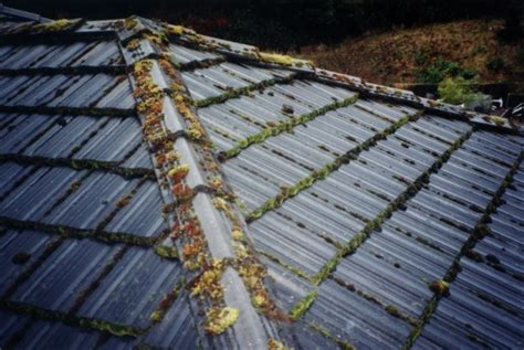 Moss Treatment For Roof Tiles R Panel Roofing Prices Tpo Manufacturers Fick Brothers Roof Shingle Installation Bloomington Indiana Brian Elder Mold Removal Honda Odyssey Rack Cross Bars