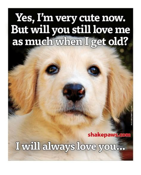 And I Will Always Love You Meme - 25 best memes about i will always love you i will always love you memes