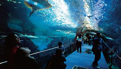 maritime aquarium palacio mar 224 donostia san sebasti 193 n gipuzkoa mus 233 es au pays basque