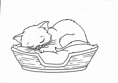 Kitten Coloring Pages Basket Sleeping Cat Cats