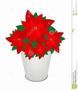 Pot De Fleur Rouge : fleur rouge de poinsettia de no l dans un pot de fleur illustration de vecteur illustration du ~ Melissatoandfro.com Idées de Décoration