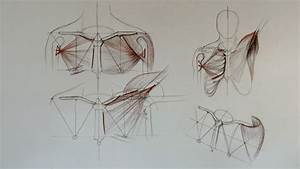 Shoulder Anatomy - Anatomy Master Class
