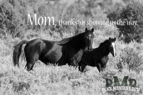 wild horse quotes quotesgram