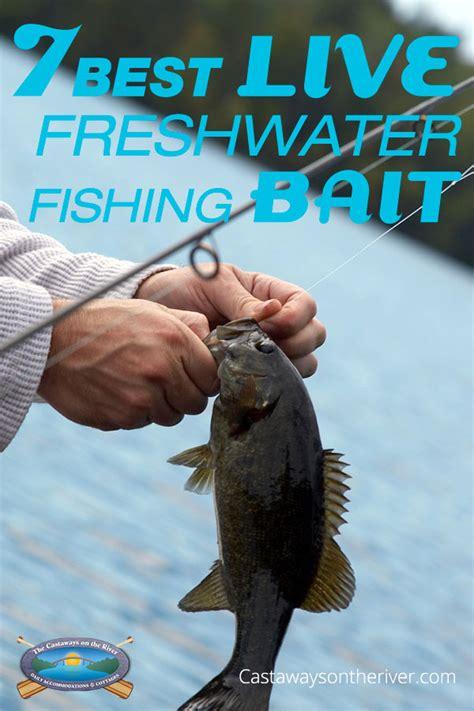 freshwater fishing bait