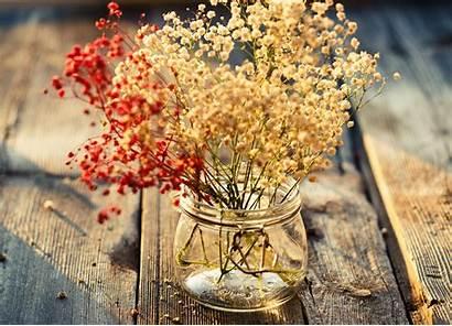 Vase Flower Flowers Screen Wallpapers Background Jar