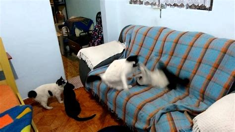 The Living Room Or Not Cat by Cats Fighting In The Living Room