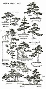 A Beginner U0026 39 S Guide To Bonsai