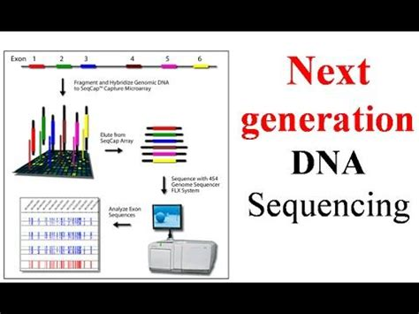 Next Sequencing Illumina Illumina Sequencing Technology