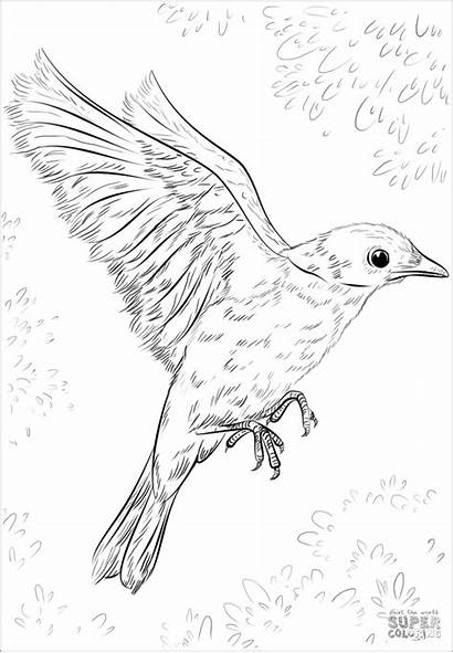 Coloring Bird Birds Drawing Realistic Flying Draw