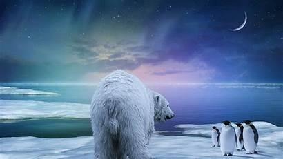 4k Northern Lights Polar Bear Penguin Background