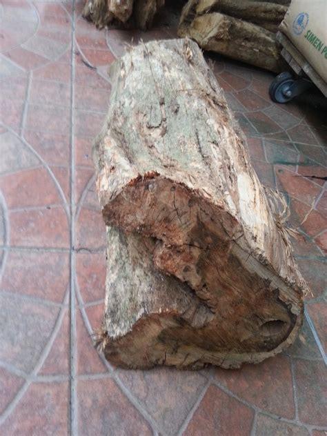 kayu warisan malaysia kayu kemuning emas  dijual
