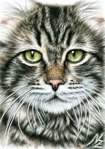 Pencil Art Drawings of Cat Faces