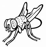 Fly Coloring Pages Guy Insect Animals Drawing Printables Printable Sheets Animal Colouring Sheet Print Thecolor Template Arnold Hi Popular Tedd sketch template