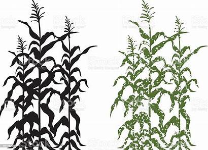 Corn Stalk Grunge Plants Silhouette Clip Cornfield