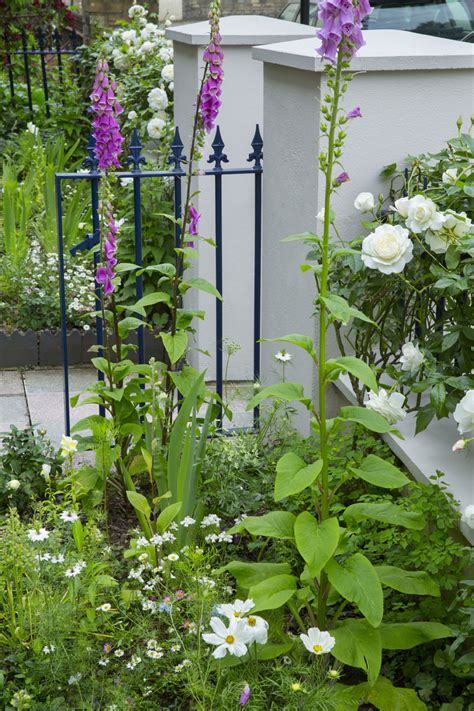 plants for facing gardens right rose right place roses for north facing walls sarah raven