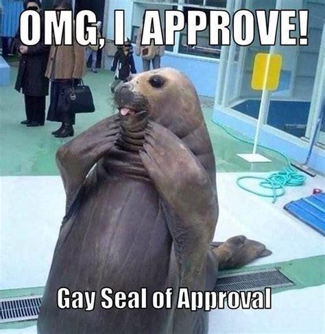 Seal Meme Gay - gay seal of approval lgbt pinterest