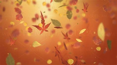 Autumn Tree Leaf Fall Animated Wallpaper - autumn leaves backgrounds wallpaper cave