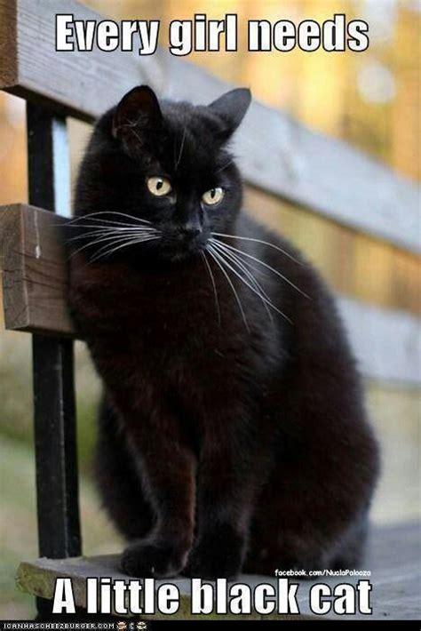 Black Cat Memes - 39 best black cat memes images on pinterest black cats ha ha and funny stuff