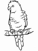 Parrot Coloring Perched Pages Printable Parrots Puerto Supercoloring Rican Animals Branch Colouring Clipart Na sketch template