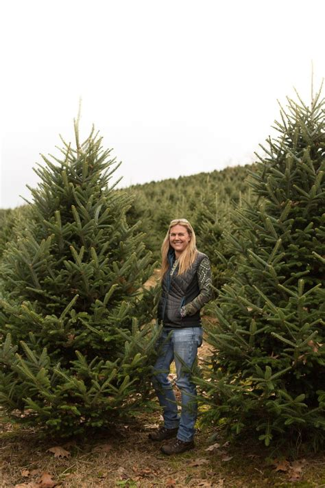 piper mountain christmas tree farm for sale tree farm in carolina trees for sale wholesale