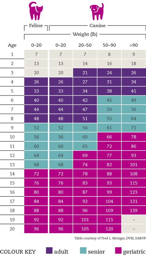 cat dog age calculator whats  real age   pet