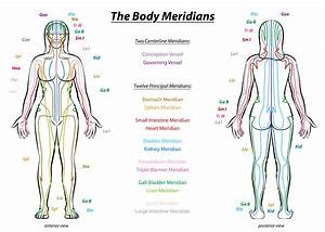 Acupuncture Meridians  What Qigong Students Need To Know