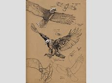 25+ best ideas about Eagle drawing on Pinterest Eagle