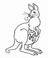 Kangaroo Pouch Colouring Coloring Picolour sketch template