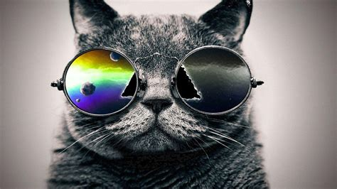 Cool Cat Backgrounds  Wallpaper Cave