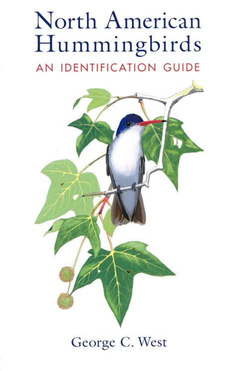 review north american hummingbirds  identification guide