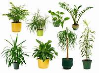 house plants pictures Choosing House Plants - How To Choose