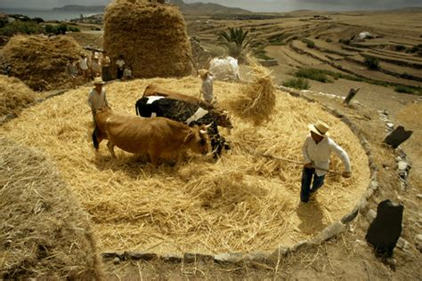 define biblical threshing floor threshing floor being woven