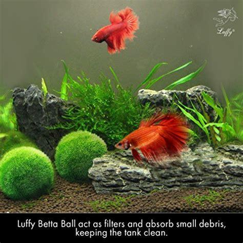 LUFFY Betta Balls : Live Round Shaped Marimo Plant