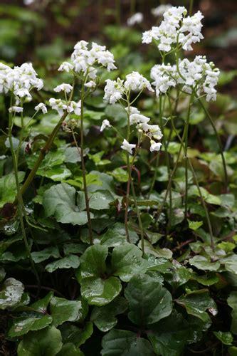 great garden plants view plant great plant picks