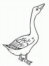 Goose Coloring Angry Colouring Clipart Duck Template Geese Flying Netart Glass Animal Stained Bird Popular Mother Library Results Coloringhome sketch template