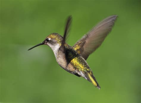 how do hummingbirds find life sustaining nectar without