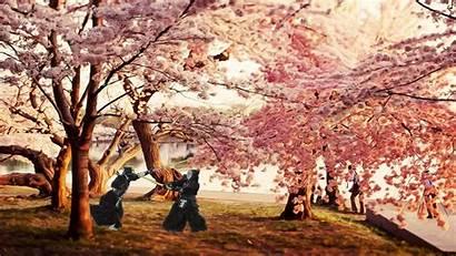 Blossom Cherry Kendo Wallpapers Fight Japanese Samurai
